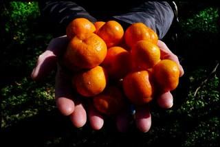 1º Ciclo. Escolas distribuem frutas e legumes para promover bons hábitos alimentares
